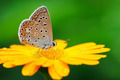 butterfly on yellow flower - PhotoDune Item for Sale