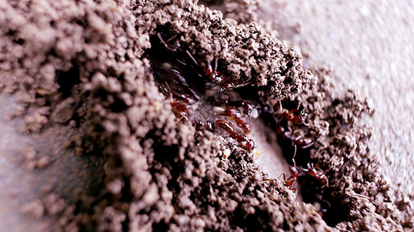 Ant Building Colony 01