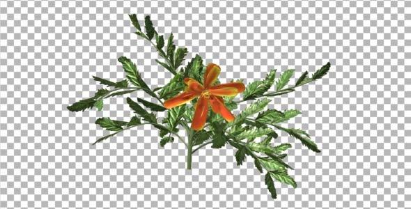Flowers V 2