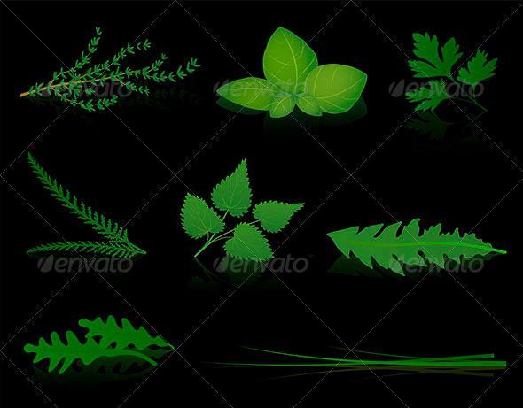 GraphicRiver Herbs Black 8492224