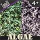 Dried Algae - GraphicRiver Item for Sale