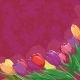 Tulips on Abstract Background - GraphicRiver Item for Sale
