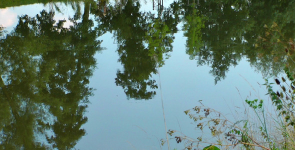 Tree Reflection on the River 3