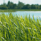 Grass and Pond - VideoHive Item for Sale