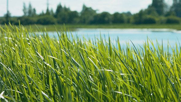 Grass and Pond