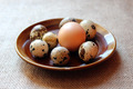 some eggs of the quail and one of the hen - PhotoDune Item for Sale
