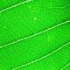 Green Leaf 10 - PhotoDune Item for Sale