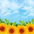 Background with Blue Sky and Sunflowers - PhotoDune Item for Sale