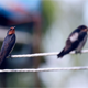 Two Birds Perched on Power Cords. - VideoHive Item for Sale