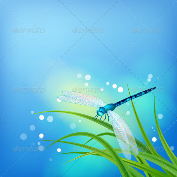 GraphicRiver Dragonfly on Grass Blade 8513853