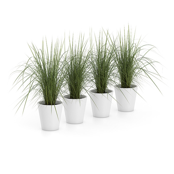 3DOcean Four Plants in White Pots 8514745