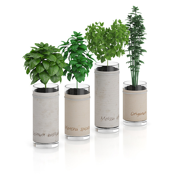 3DOcean Four Herbs in Glass Pots 8514756