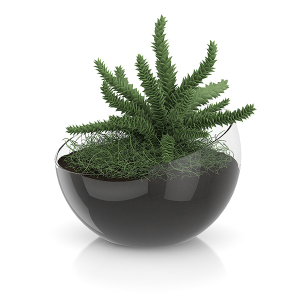 3DOcean Plant in Sphere Glass Pot 8514760