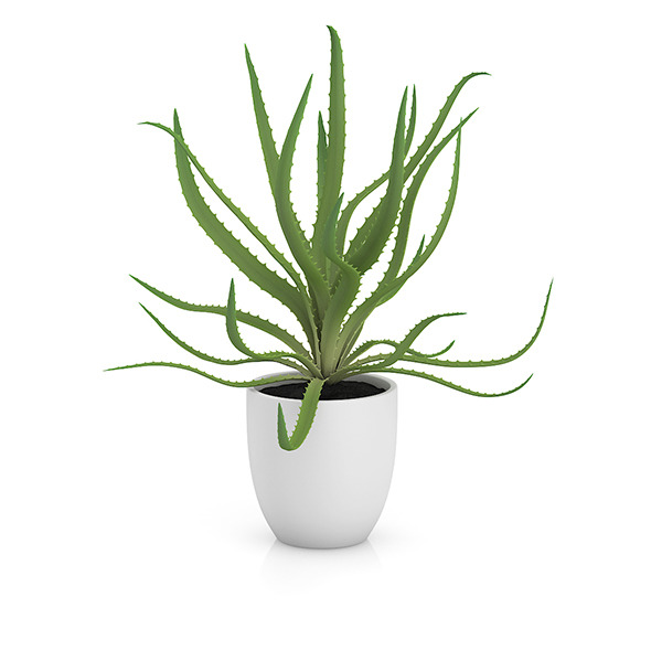 3DOcean Aloe in White Pot 8514770