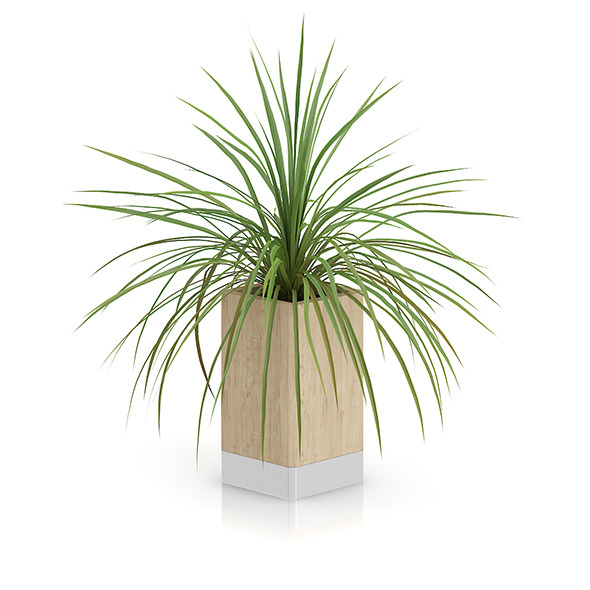 Small Plant in Wooden Pot - 3DOcean Item for Sale