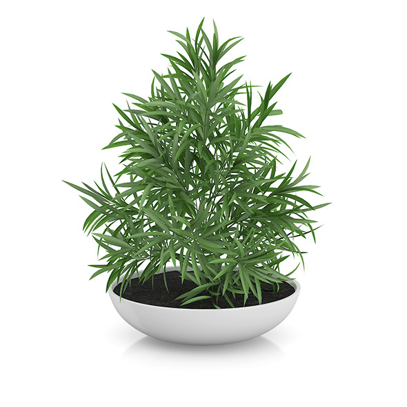 3DOcean Plant in Flat Pot 8514789