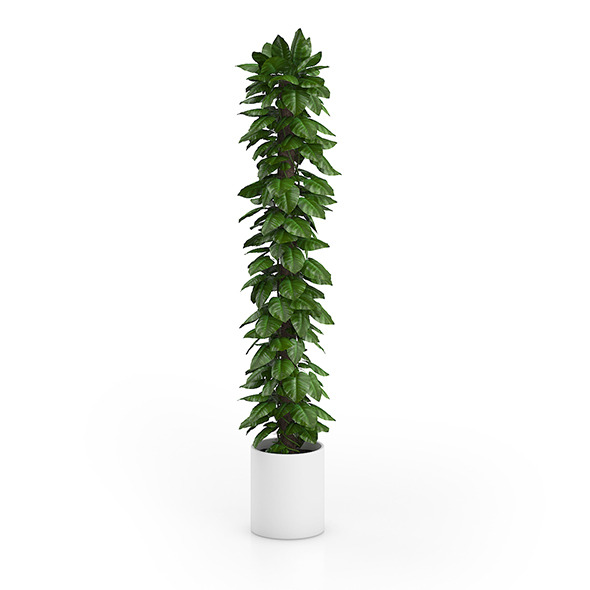 Tall Climbing Plant - 3DOcean Item for Sale