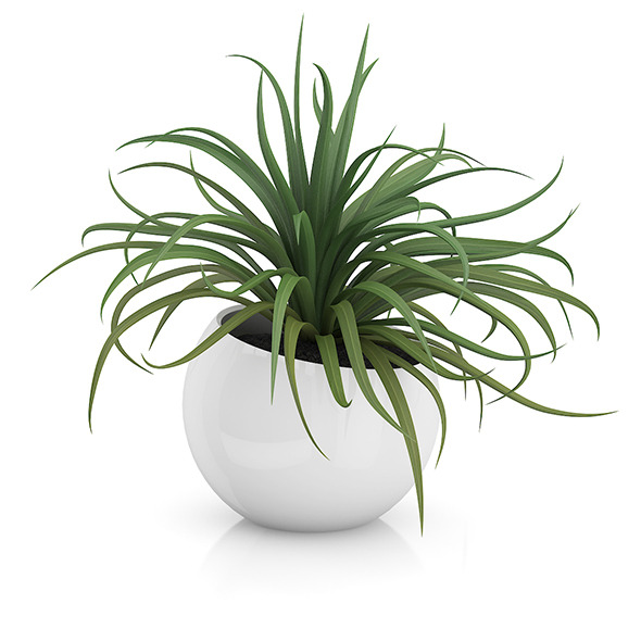 3DOcean Plant in Sphere Pot 8514809