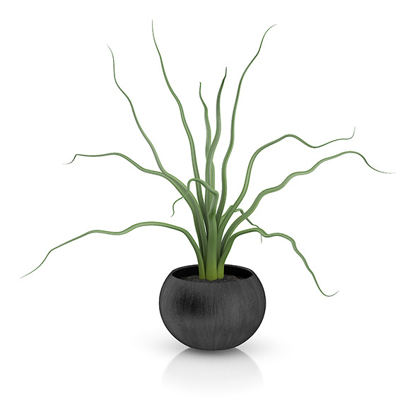 Plant in Black Wooden Pot - 3DOcean Item for Sale