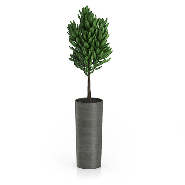 3DOcean Plant in Dark Ceramic Pot 8514889