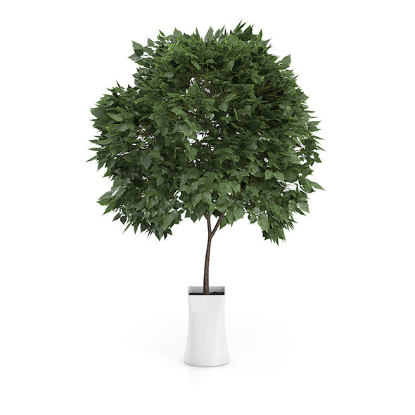 3DOcean Small Tree in White Pot 8514914