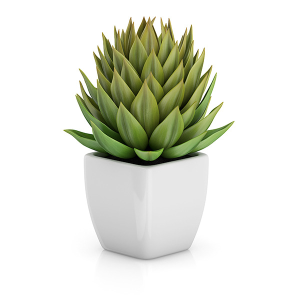 3DOcean Small Plant in White Pot 1 8514927