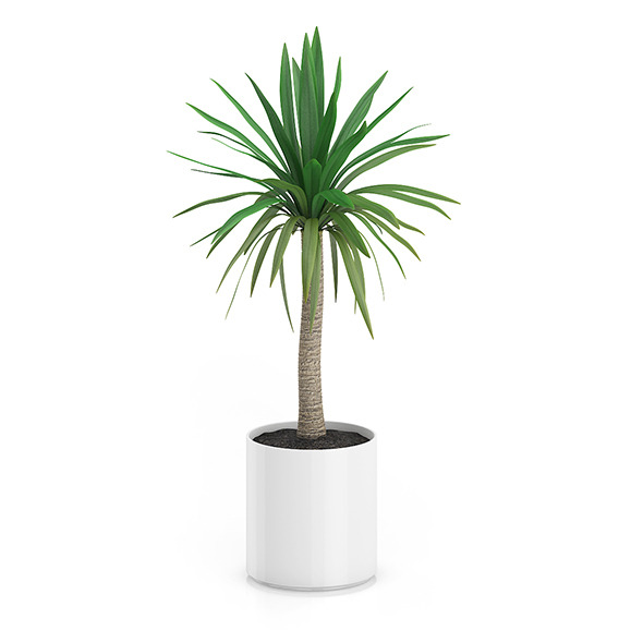3DOcean Palm Tree in Round Pot 1 8514933