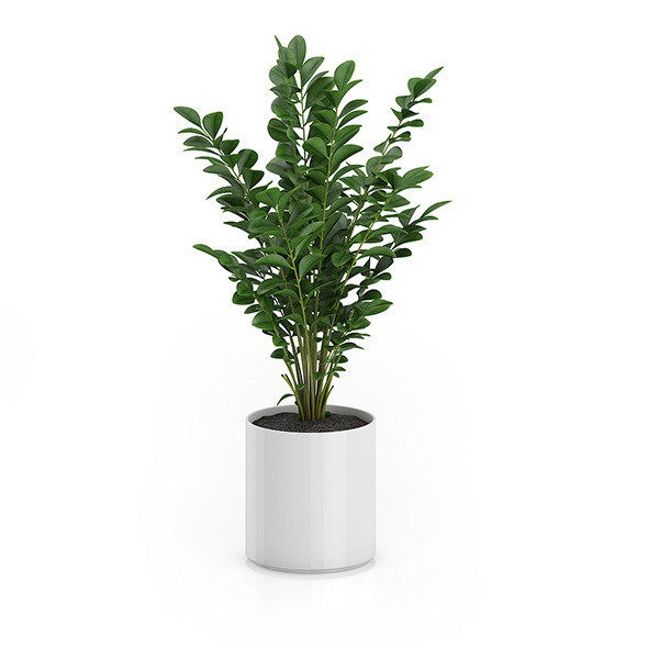Plant in Round Pot - 3DOcean Item for Sale