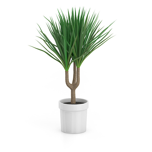 3DOcean Palm Tree in Round Pot 2 8514944