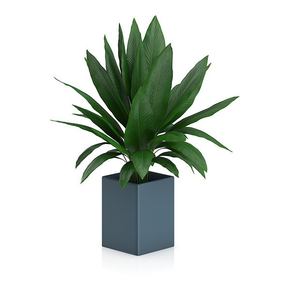 Plant in Square Blue Pot - 3DOcean Item for Sale