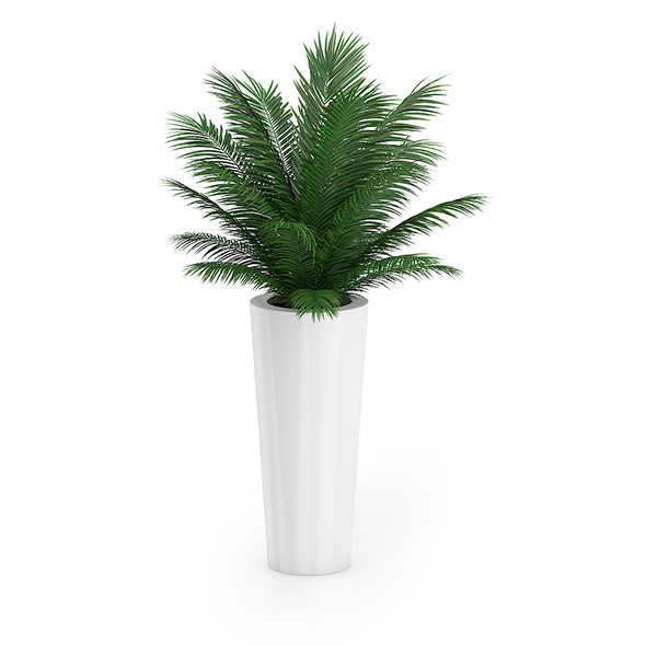 3DOcean Palm Tree in Round Pot 4 8514971