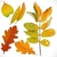 Yellow and Red Autumn Leaves - GraphicRiver Item for Sale