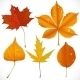 A Set of Yellow and Red Autumn Leaves  - GraphicRiver Item for Sale