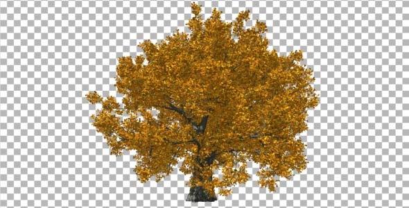Oak Fall V1