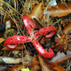octopus stinkhorn mushroom - PhotoDune Item for Sale