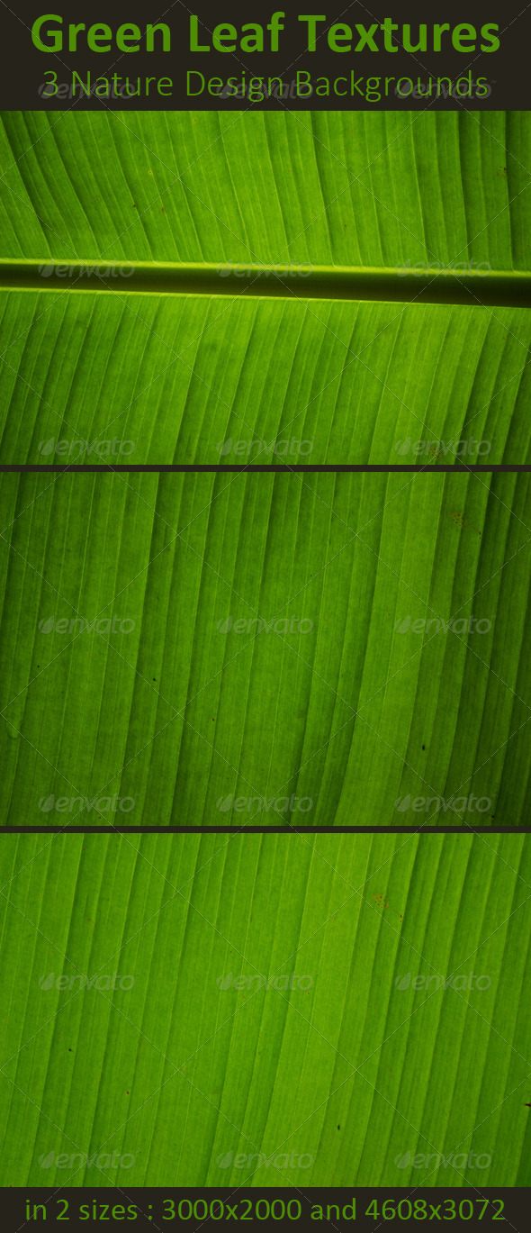 GraphicRiver Green Leaf Nature Backgrounds 8522733