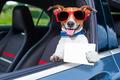 dog drivers license - PhotoDune Item for Sale