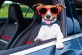 dog window car - PhotoDune Item for Sale