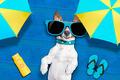 dog summer beach - PhotoDune Item for Sale