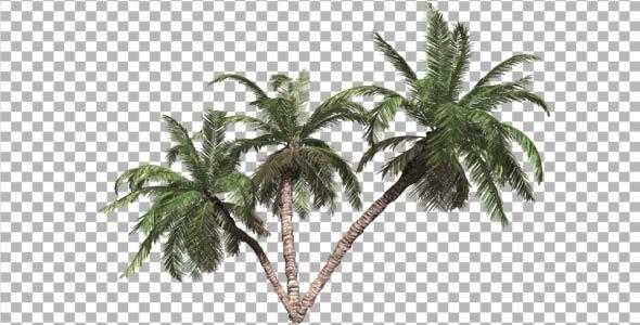 Palms V 3
