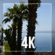 Palms And Sea - VideoHive Item for Sale