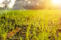 Grass regenerate in the garden. - PhotoDune Item for Sale