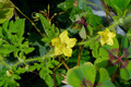 Flower of Organic agriculture, Watermelon fruit is growing in th - PhotoDune Item for Sale