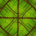Detail of a leaf fibers - PhotoDune Item for Sale