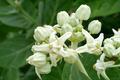 crown flower - PhotoDune Item for Sale