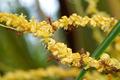 Coconut flower - PhotoDune Item for Sale
