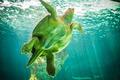 huge turtle swimming under the sea - PhotoDune Item for Sale