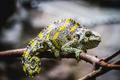 chameleon, scaly lizard skin resting in the sun - PhotoDune Item for Sale