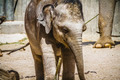 safari, baby elephant playing with a log of wood - PhotoDune Item for Sale