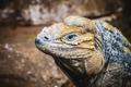 scaly lizard skin resting in the sun - PhotoDune Item for Sale